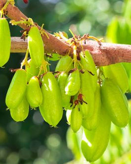 Bilombo Fruit Tree Plant